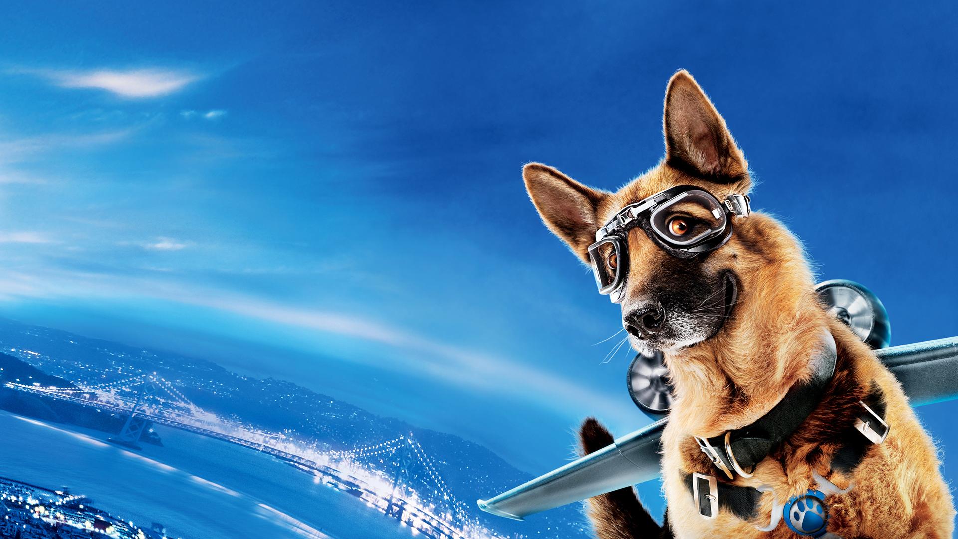 Cats Vs Dogs Movie