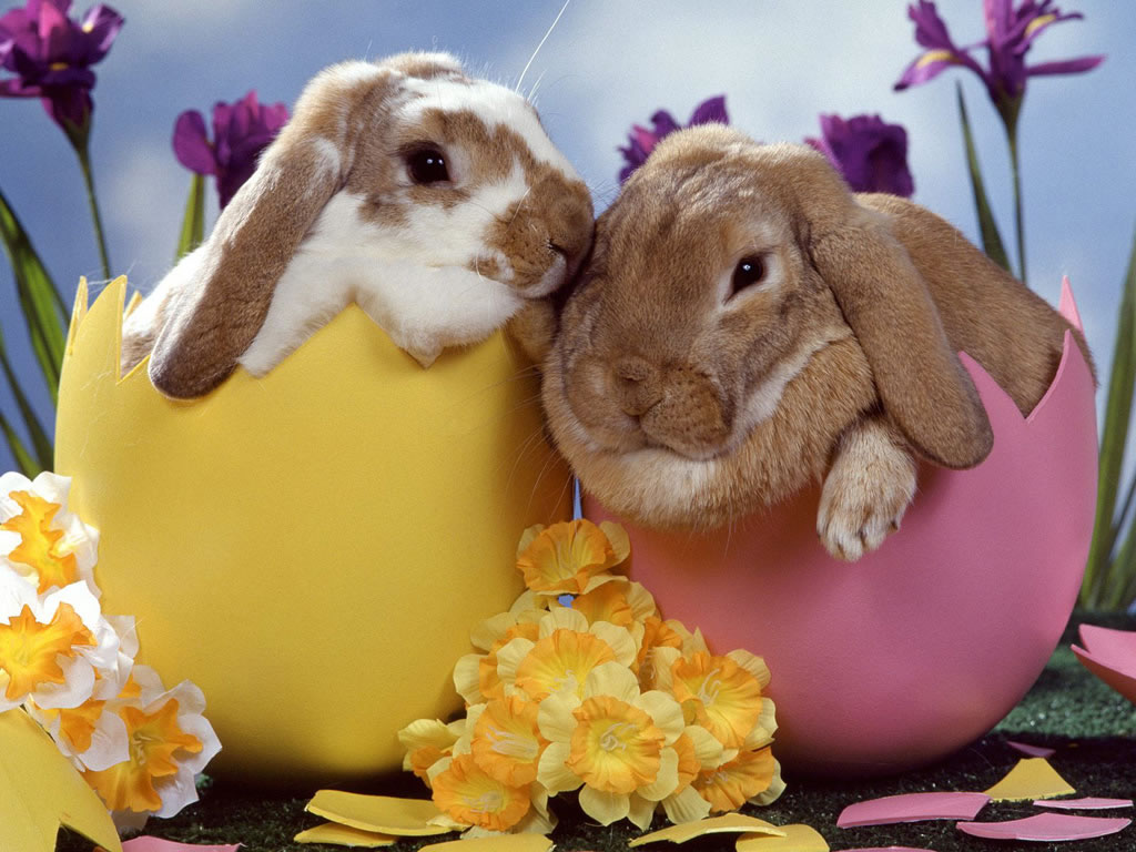 Image gallary 5 Beautiful Happy Easter Wallpapers for Desktop 1024x768