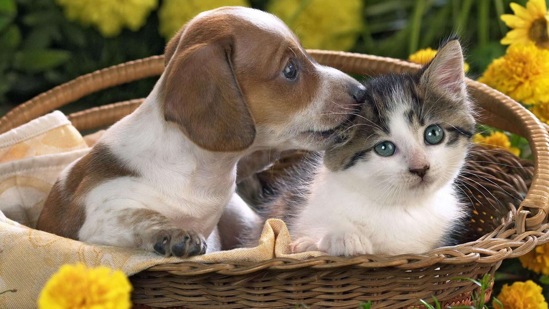 Puppy And Kitten   1920x1080   169 1920x1080