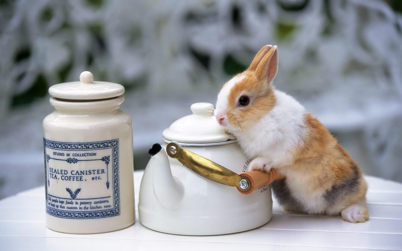 Cute Easter Sunday Desktop Wallpaper 1440x900
