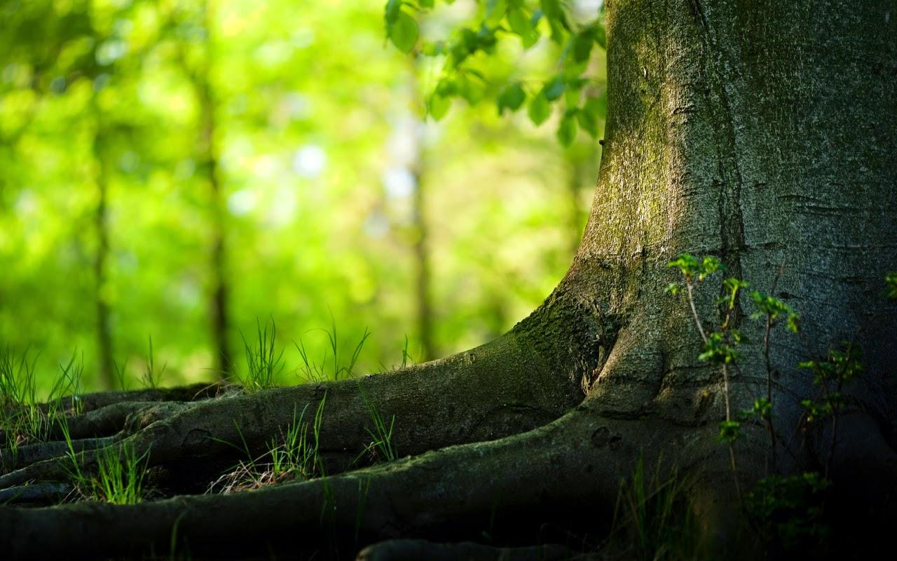 Amazing Nature Wallpaper HD For Desktop | ZLLOX