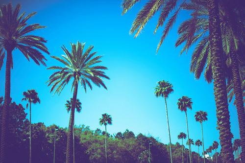 beach callifornia palmtree summer sky 500x333