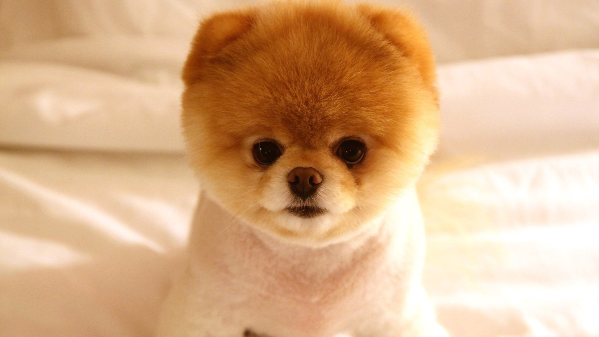 very cute little dog wallpapers55com   Best Wallpapers for PCs 1920x1080
