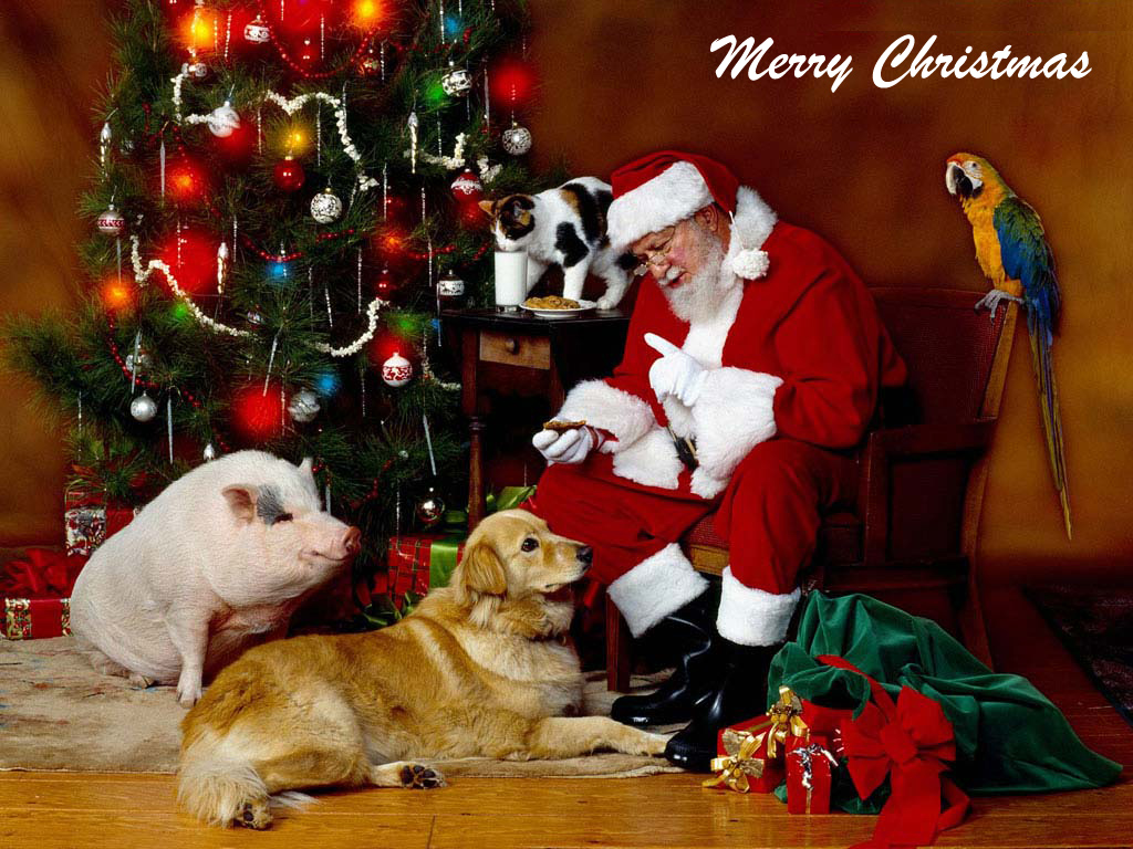christmas santa and animals wallpaper Friends in Need Animal Rescue 1024x768