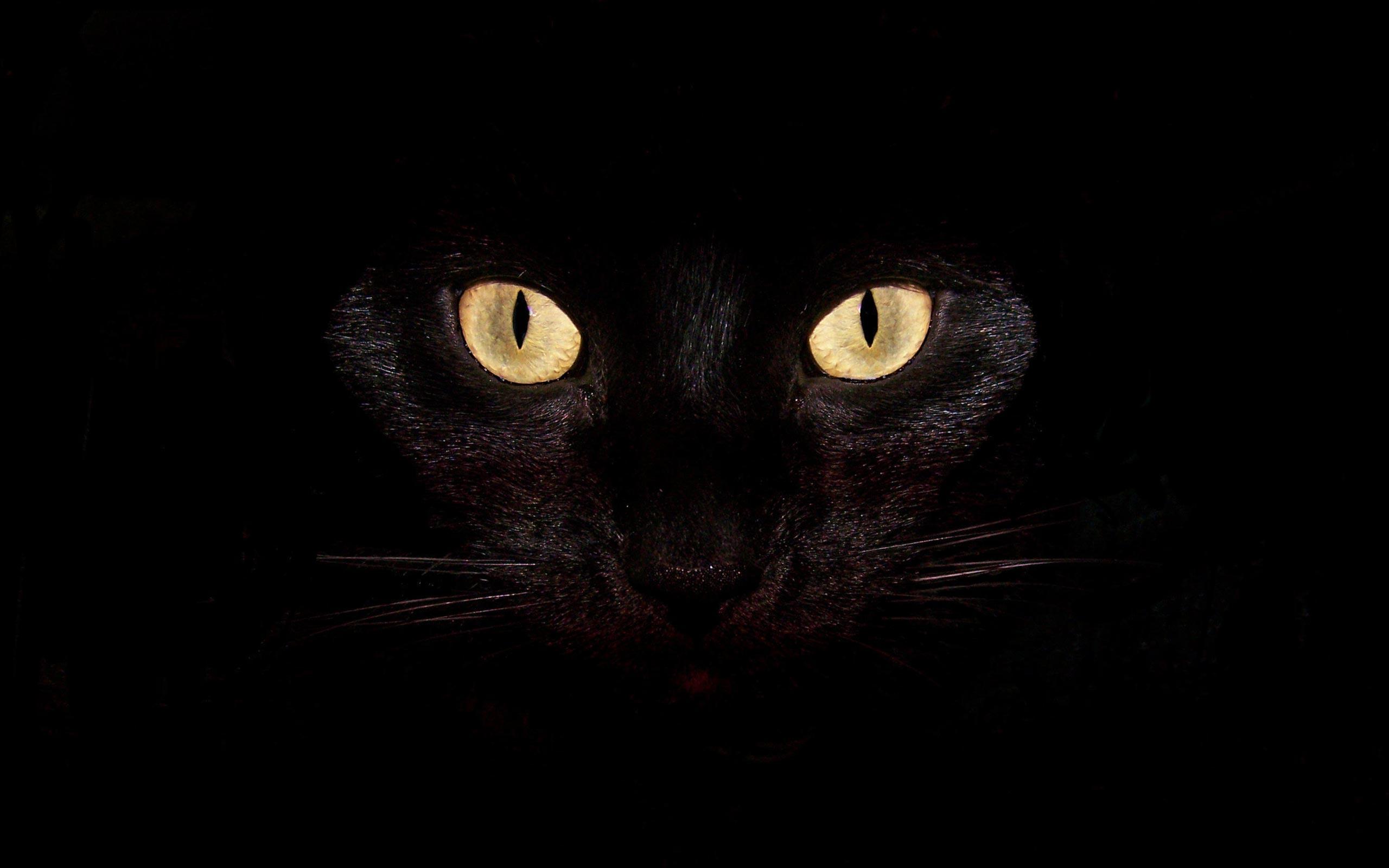 обои на рабочий стол черные кошки на черном фоне № 154890 без смс