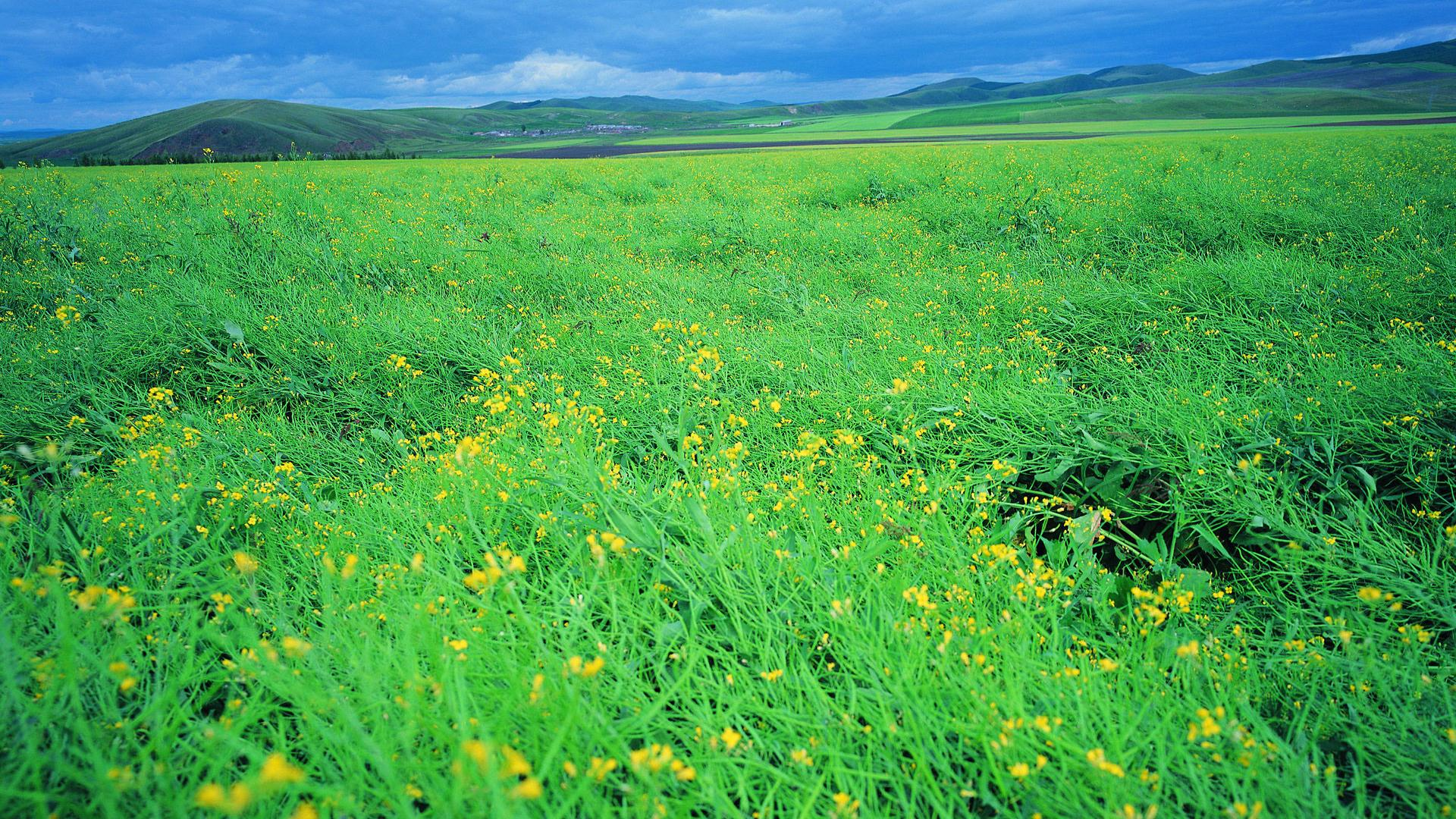 ... Grassland Scenery Background Widescreen and HD background Wallpaper