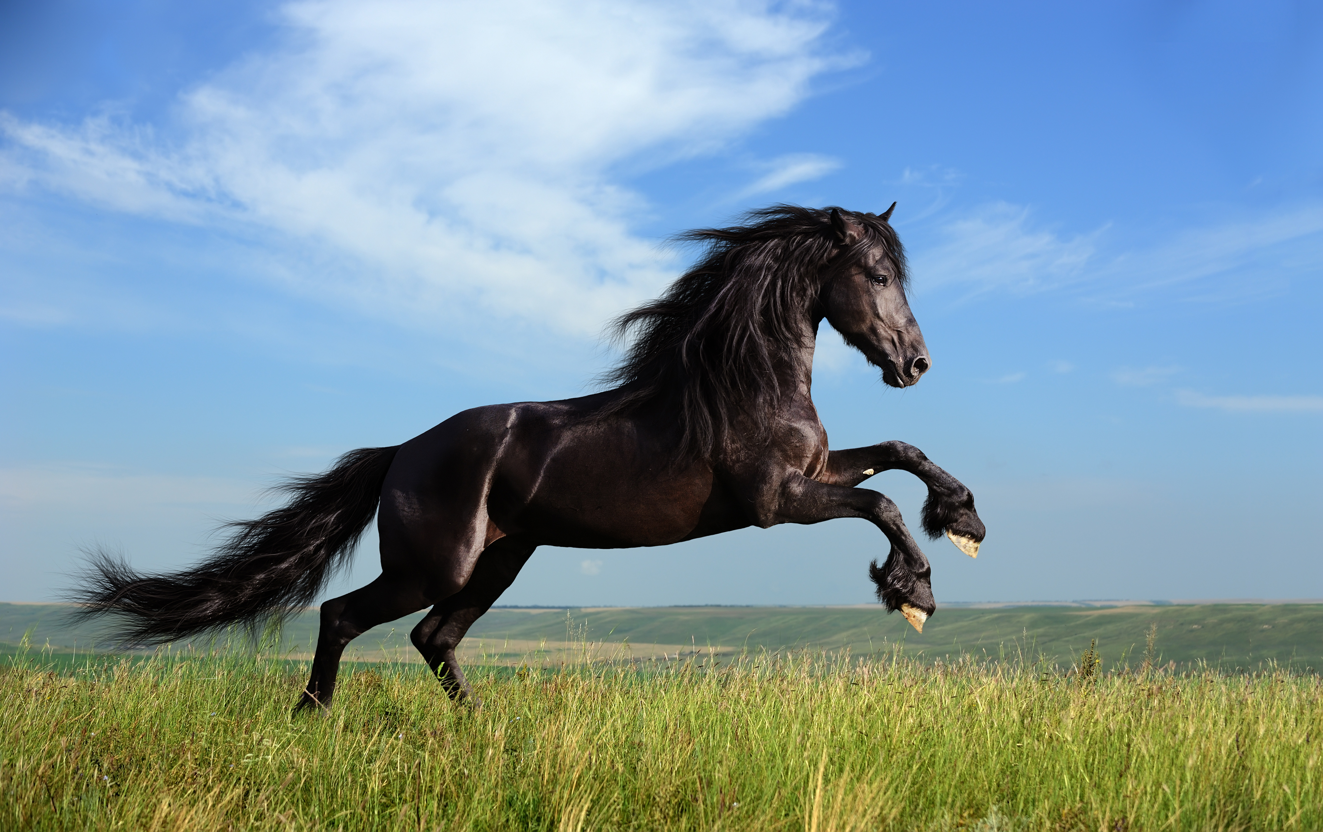 1429 Horse HD Wallpapers Background Images 4502x2832