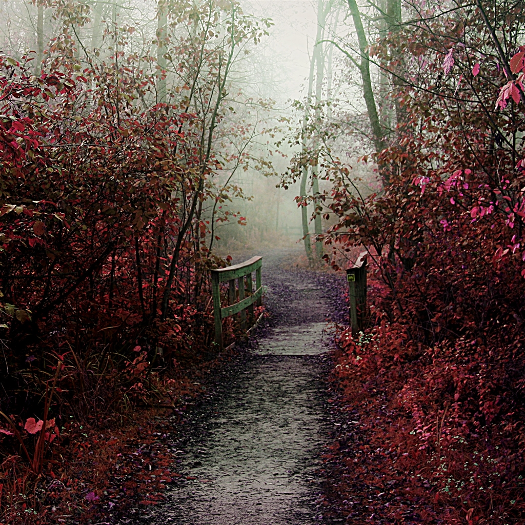Autumn Mist Path iPad Air Wallpaper Download iPhone Wallpapers iPad 1024x1024