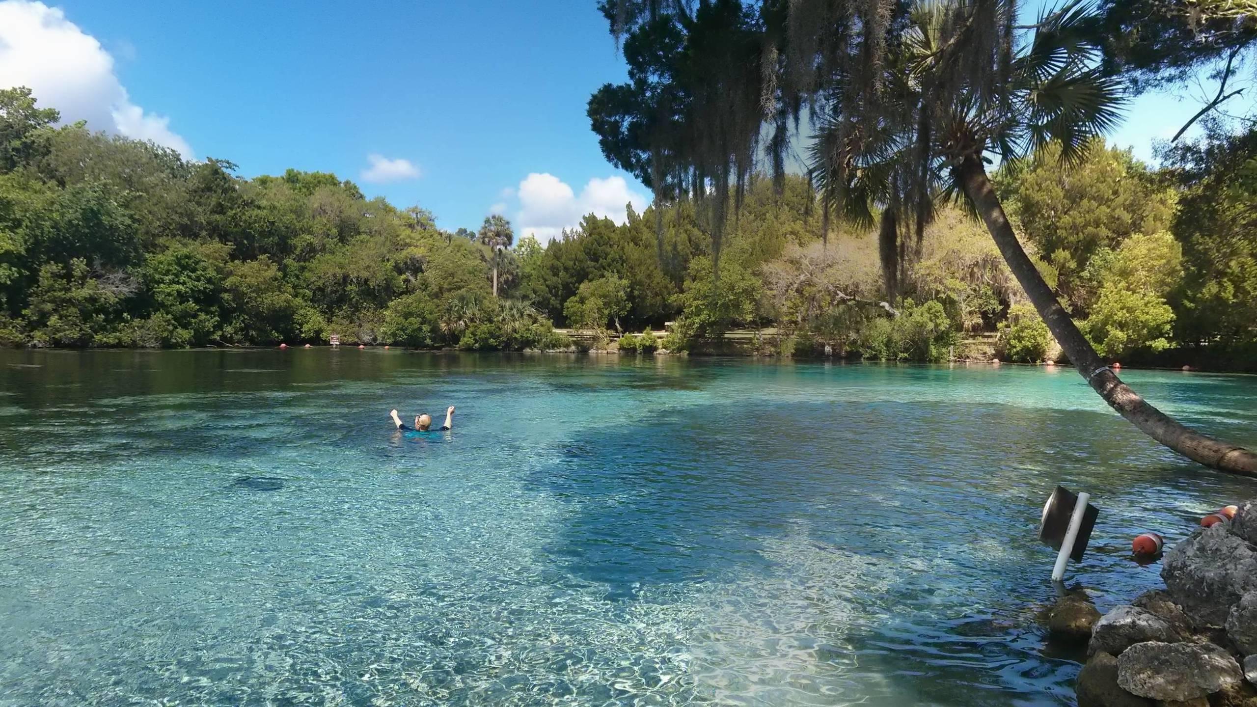 Glen Spring Ocala National Forest Ocala Florida iimgurcom 2560x1440
