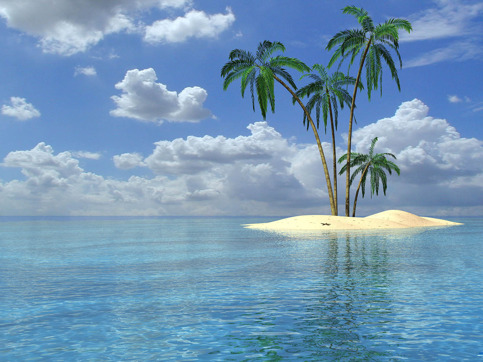 Palm Trees Wallpapers Palm Trees Desktop Wallpapers Palm Trees 1600x1200