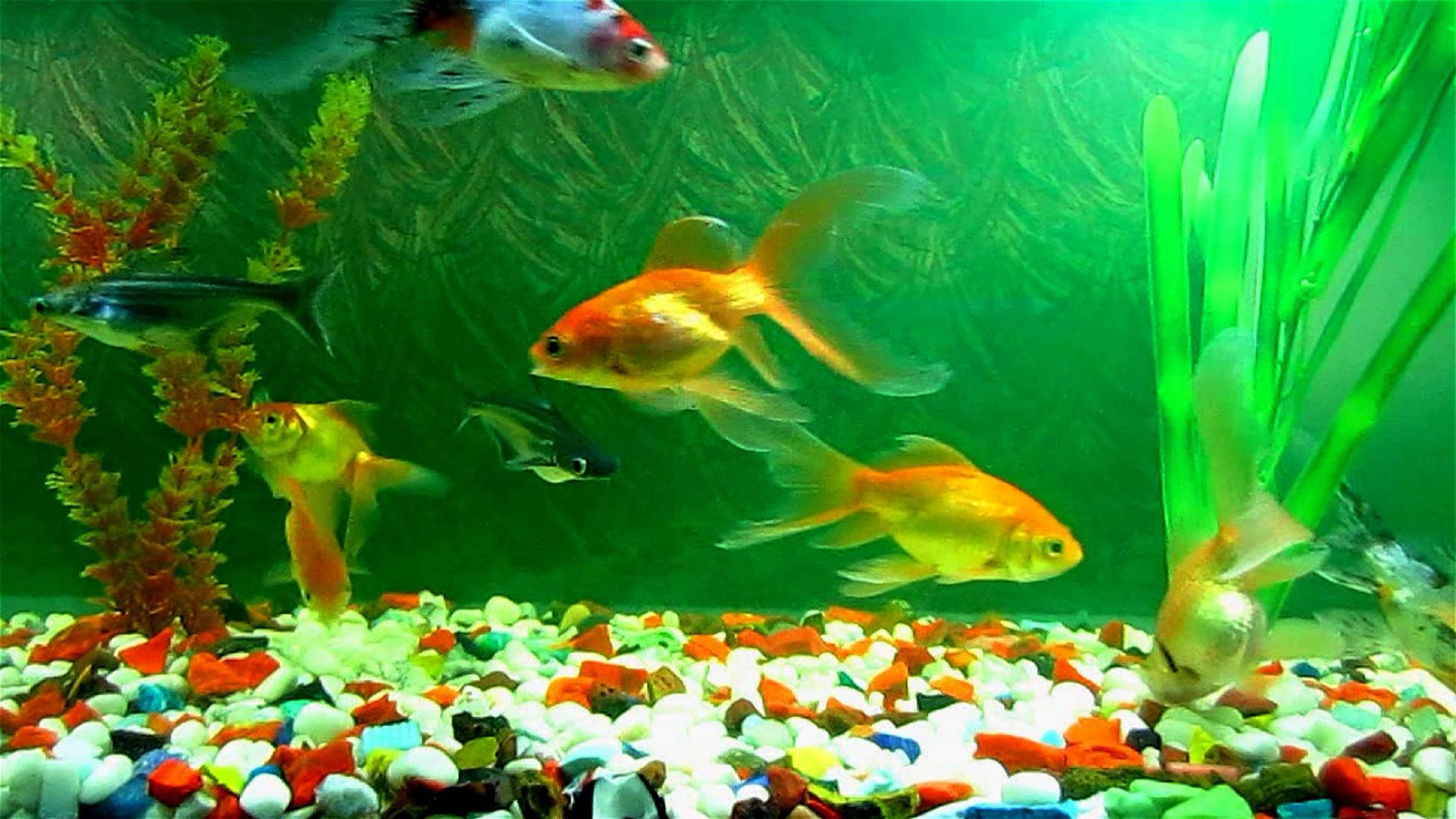 Live Wallpaper Windows 10 Fish - WallpaperSafari