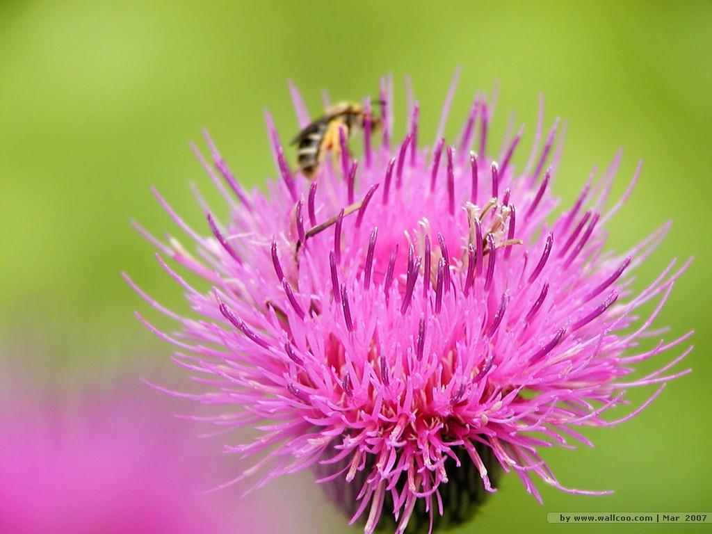 bee wallpaper 26 jpg 11 bee wallpaper 28 1024x768
