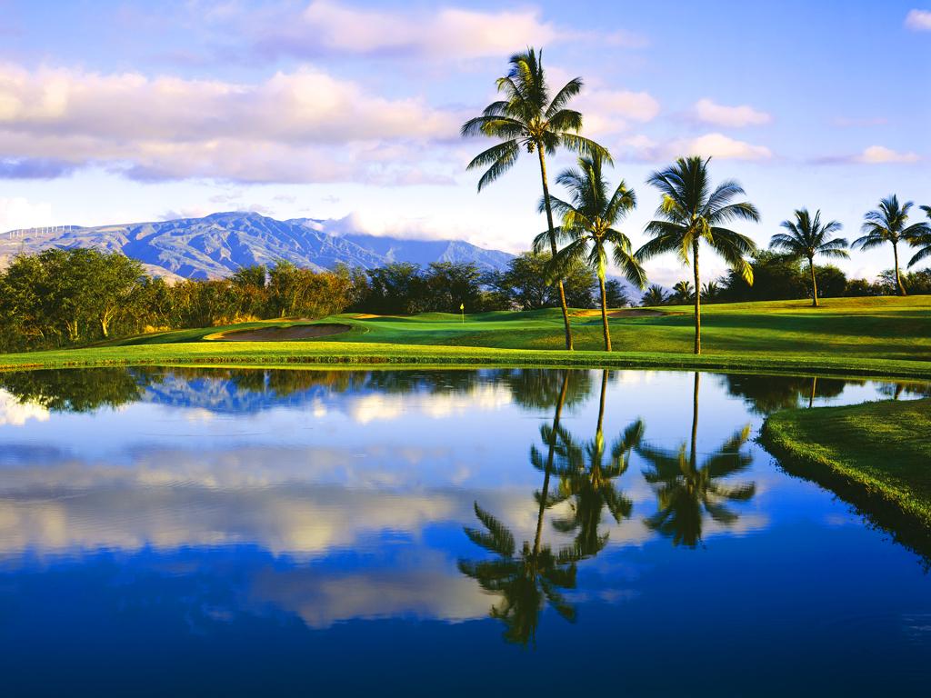 Palm3Ltd Specializing in Hawaiian Island WordPress site management 1024x768