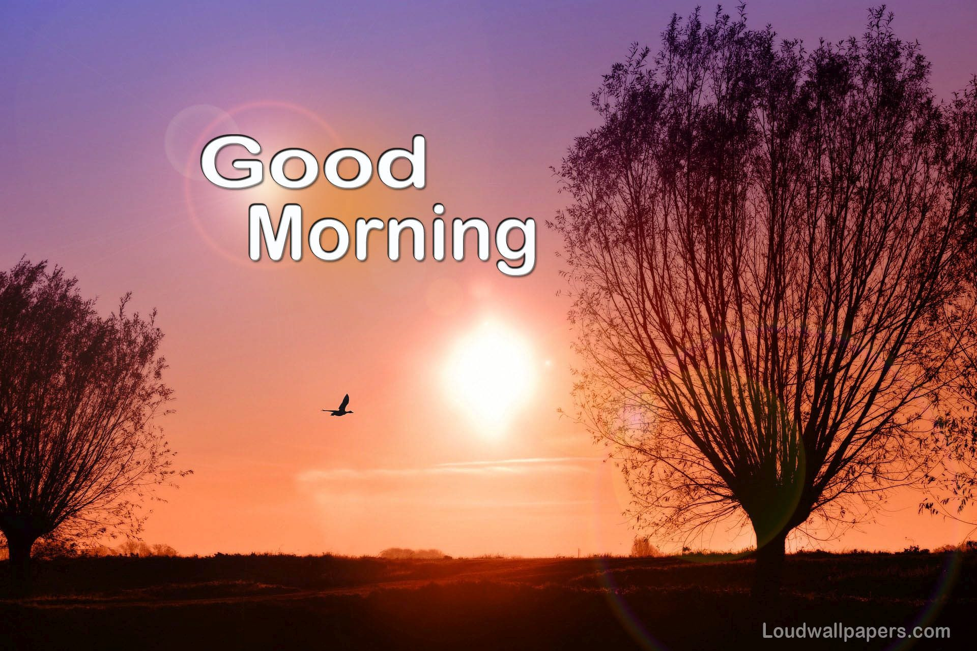 Good Morning Birds Wishes Wallpapers and Quotes 1920x1281