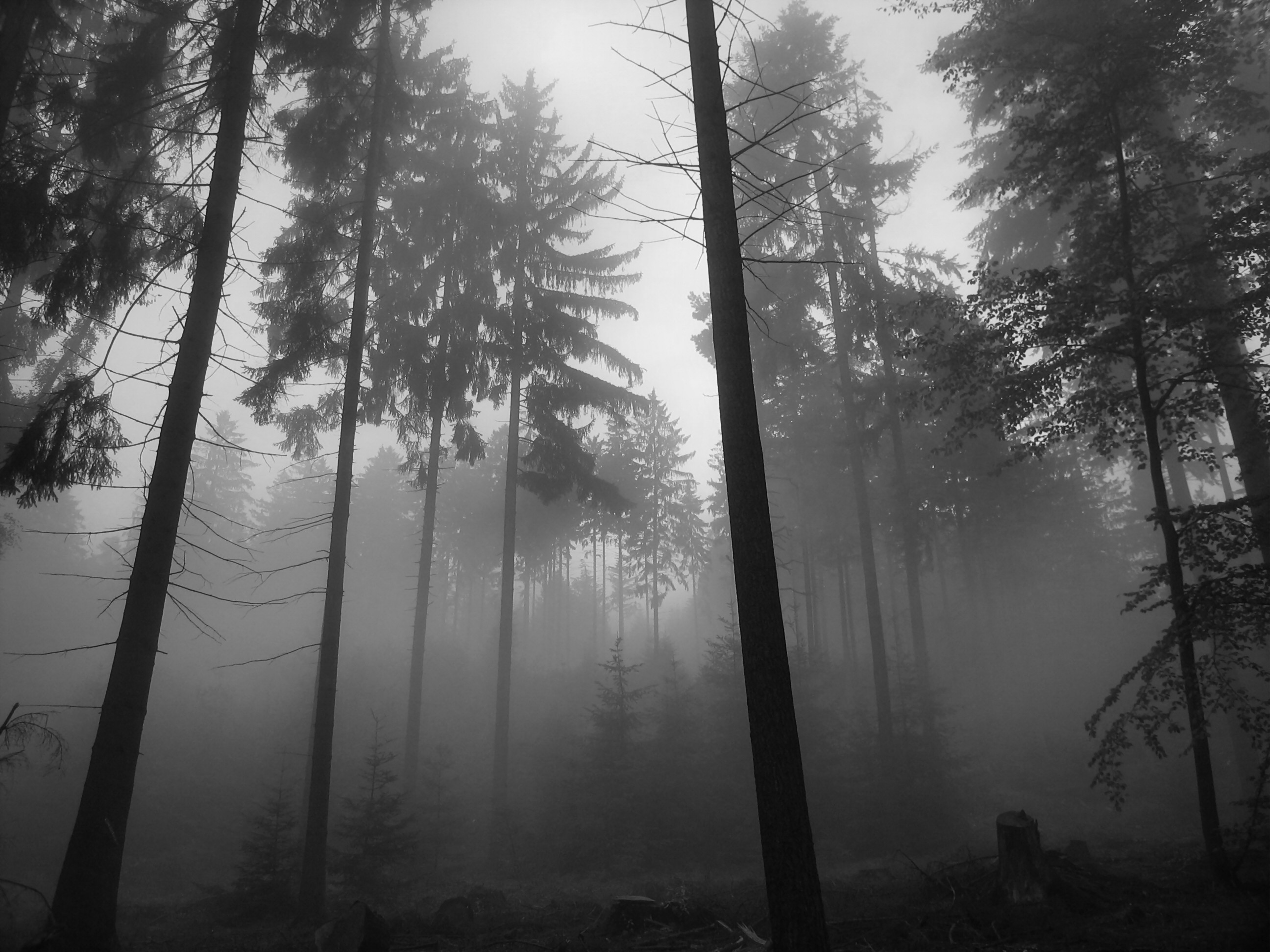 Forest Wallpaper is the best way to remind you of the woods and the 2592x1944