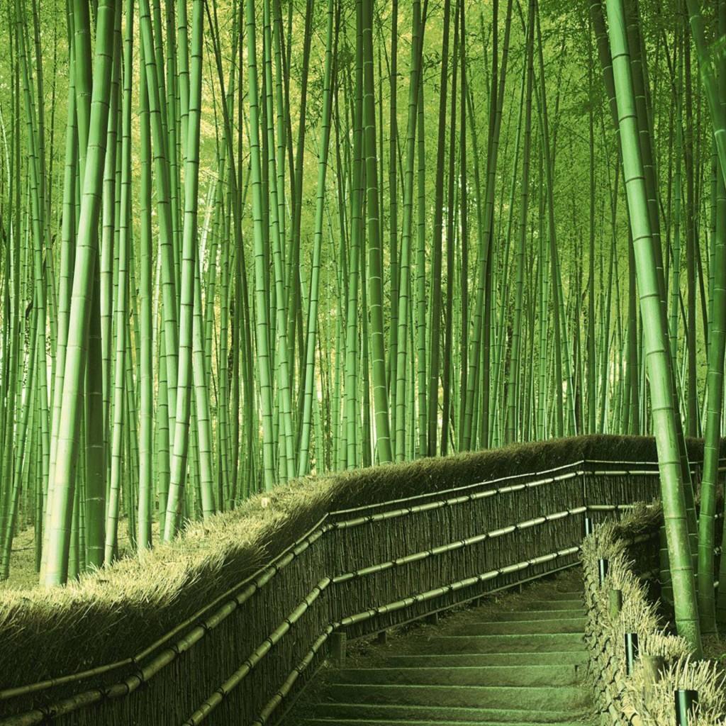 Bamboo Forest Japan Computer Wallpaper Wallpapersafari