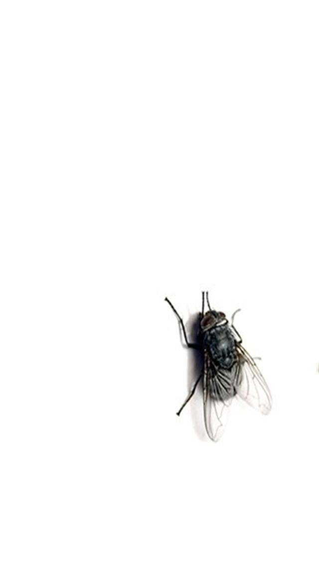 Plain Fly Animal iPhone Wallpapers iPhone 5s4s3G Wallpapers 640x1136