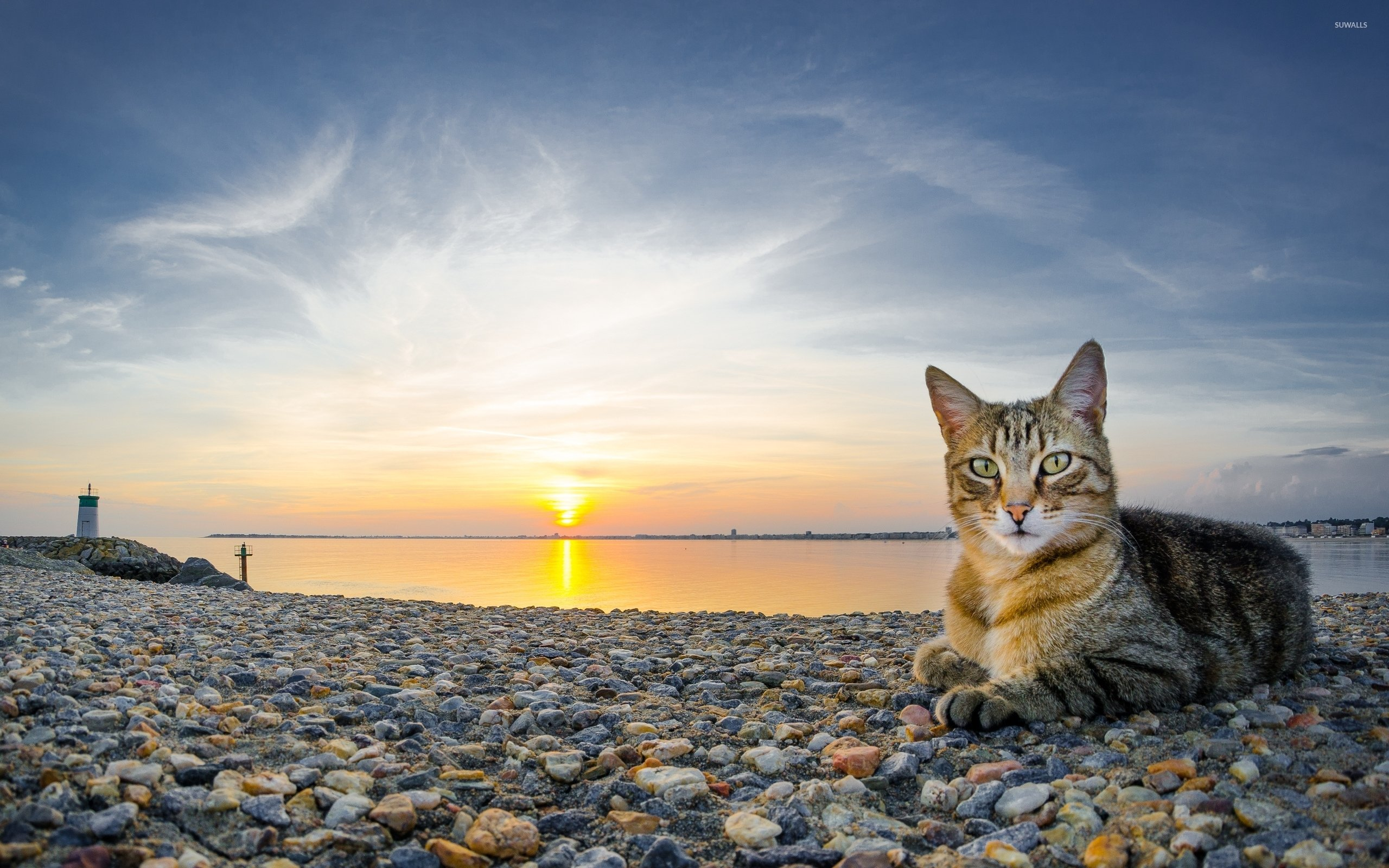 Cat on a rocky sunset beach wallpaper   Animal wallpapers   39661 2560x1600