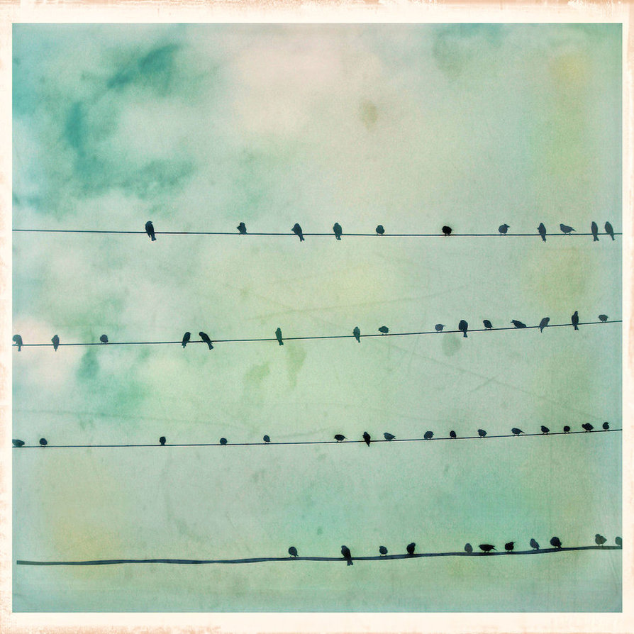 Free Download Vintage Birds On A Wire By Moon Willow On Deviantart