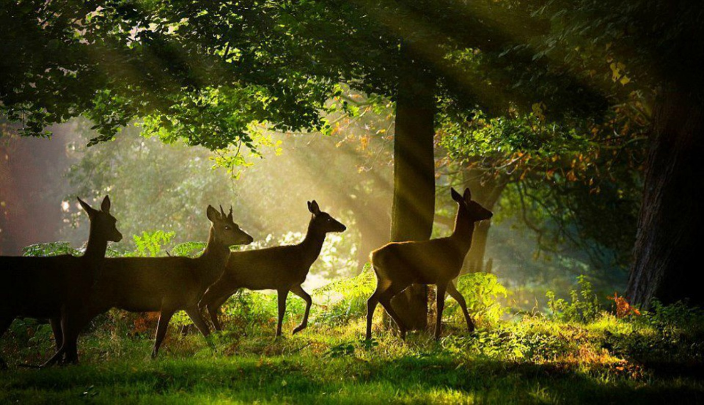 Most Beatiful Beautiful DEER Wallpapers In HD   Beautiful Wallpaper 1380x794