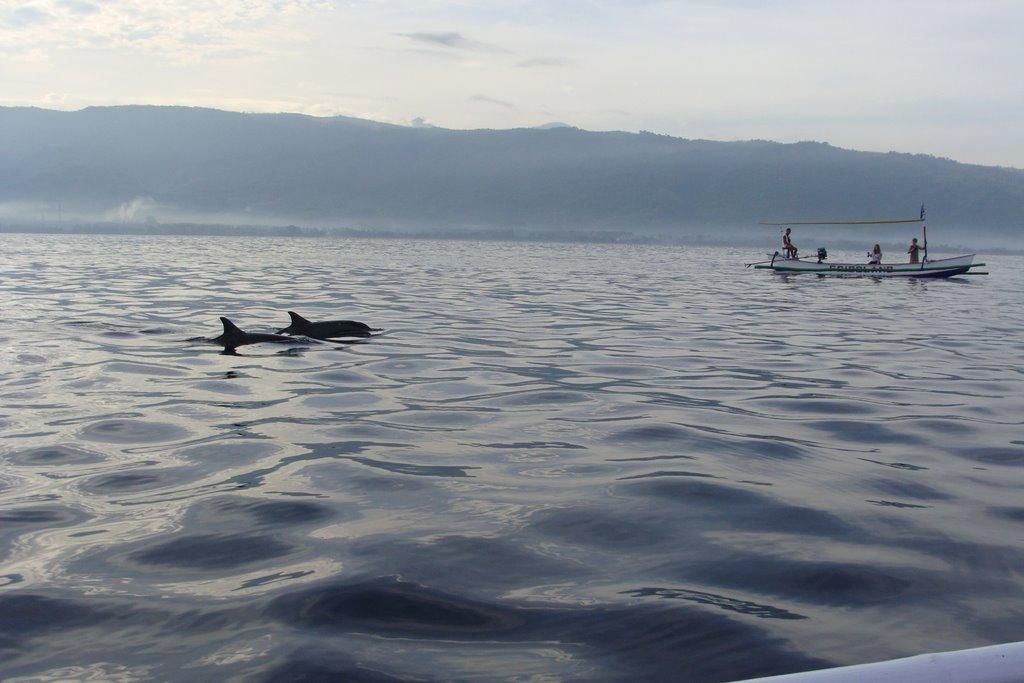 Dolphin Lovina Beach Wallpaper 8658 Wallpaper ForWallpaperscom 1024x683