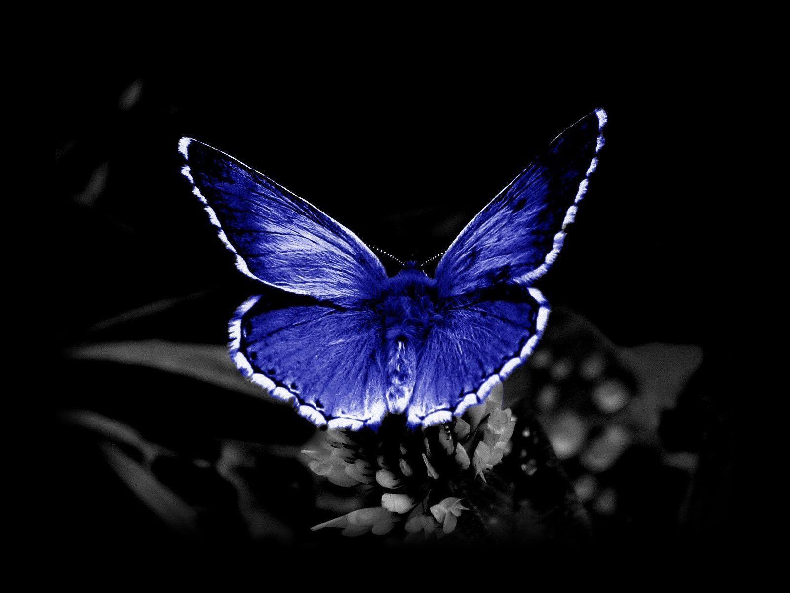 Cool Butterfly Wallpapers 1600x1200