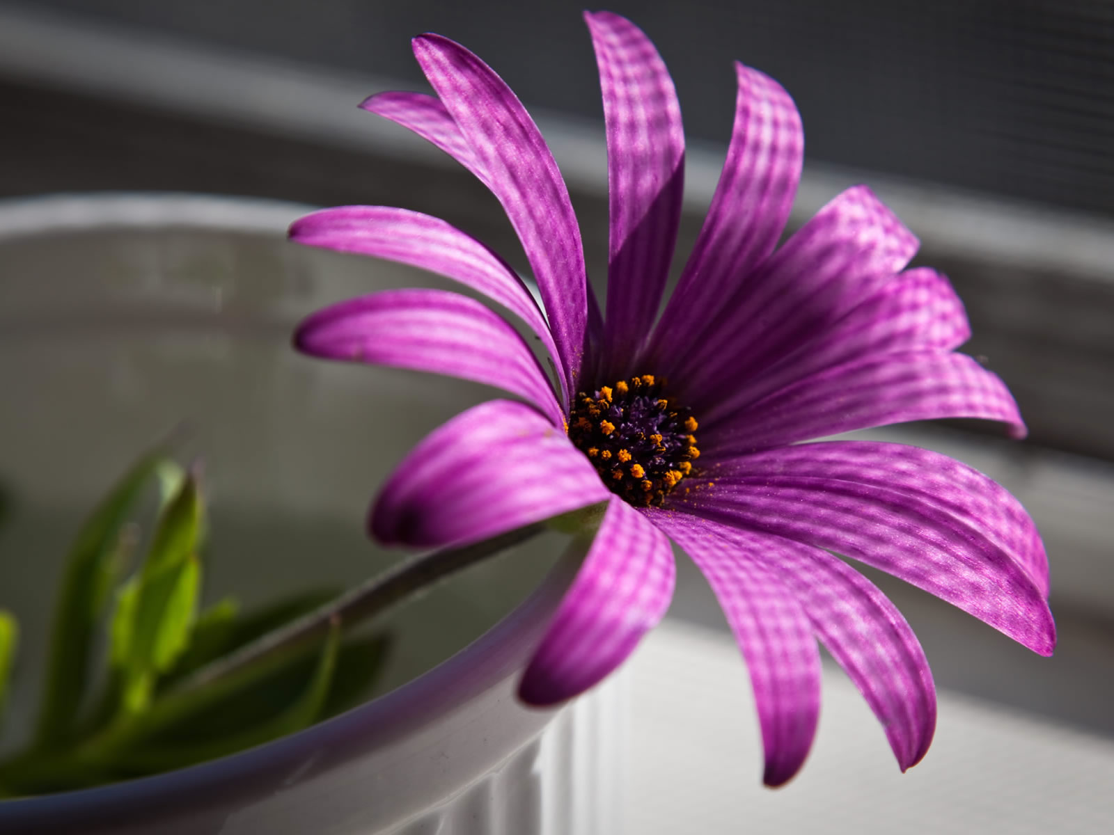 flowers for flower lovers Desk top HD Beautiful flowers wallpapers 1600x1200