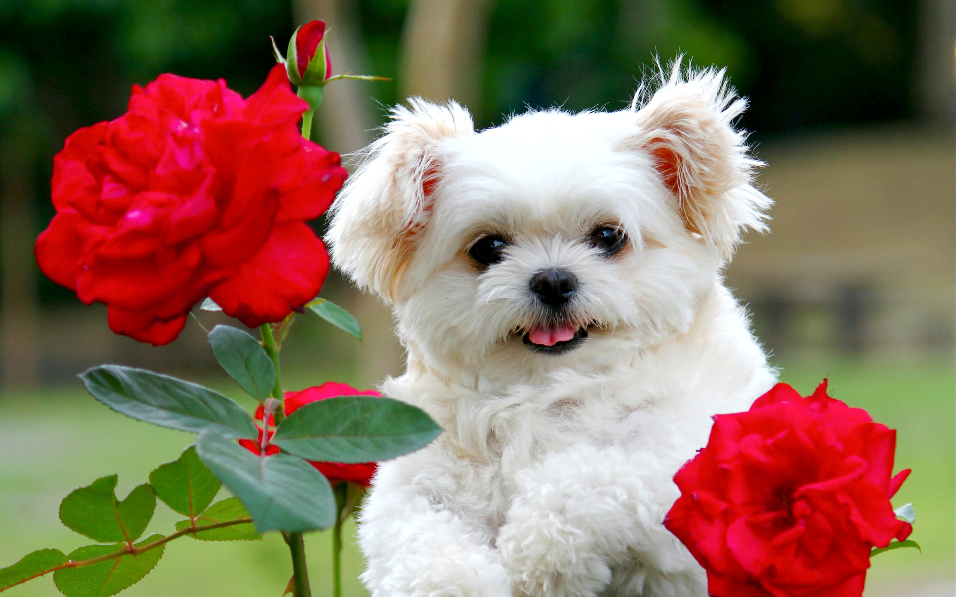 Cute puppy wallpaper   SF Wallpaper 1920x1200