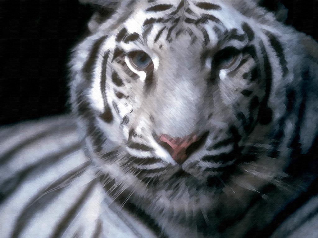 Wallpapers White Tiger Downloads Tiger Tiger Downloads White 1024x768