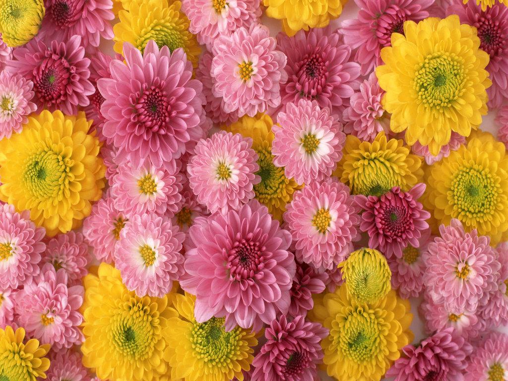 flowers for flower lovers Flowers wallpapers HD desktop Beautiful 1024x768