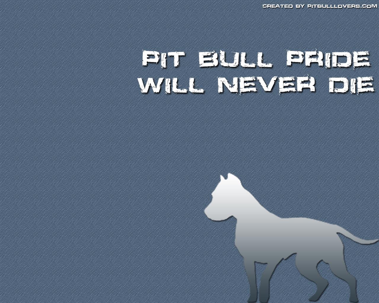 Pit Bull Wallpaper for Computer - WallpaperSafari