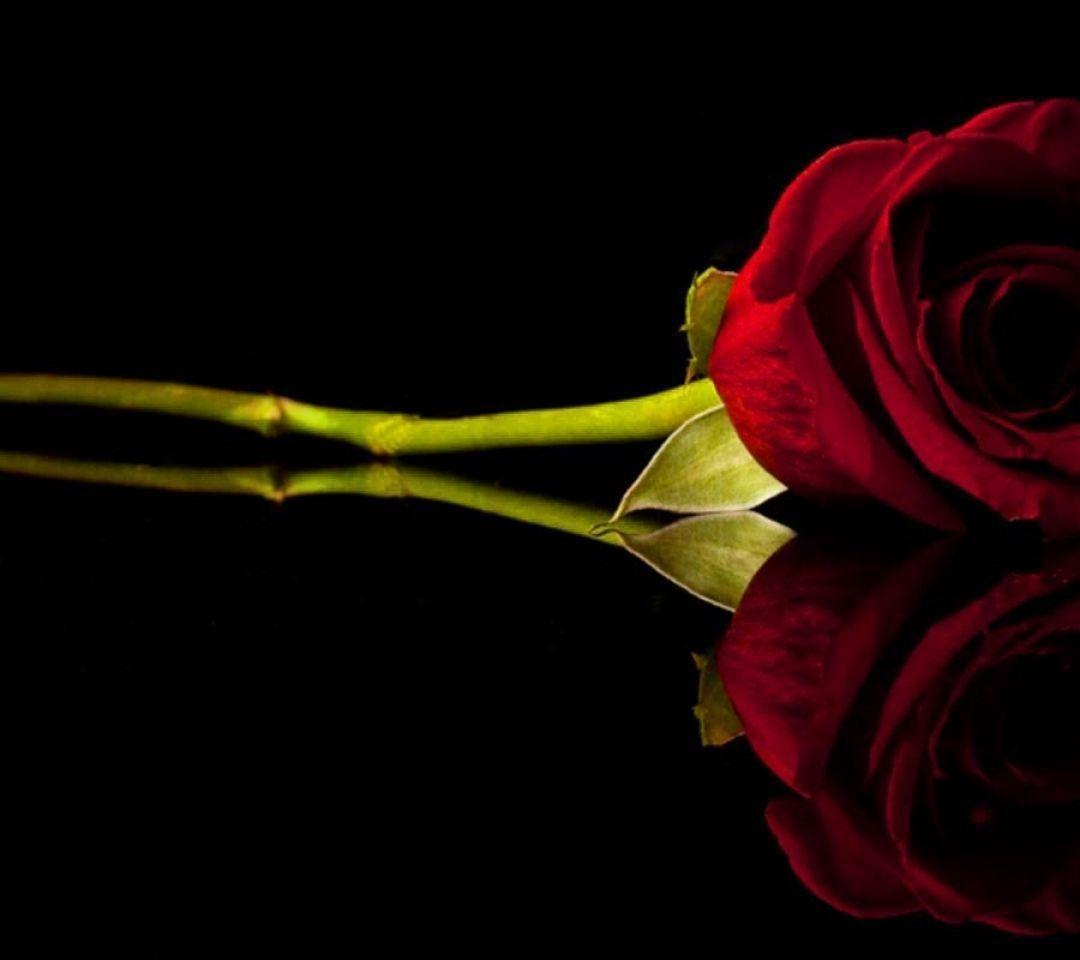 Red Rose Black Backgrounds 1080x960