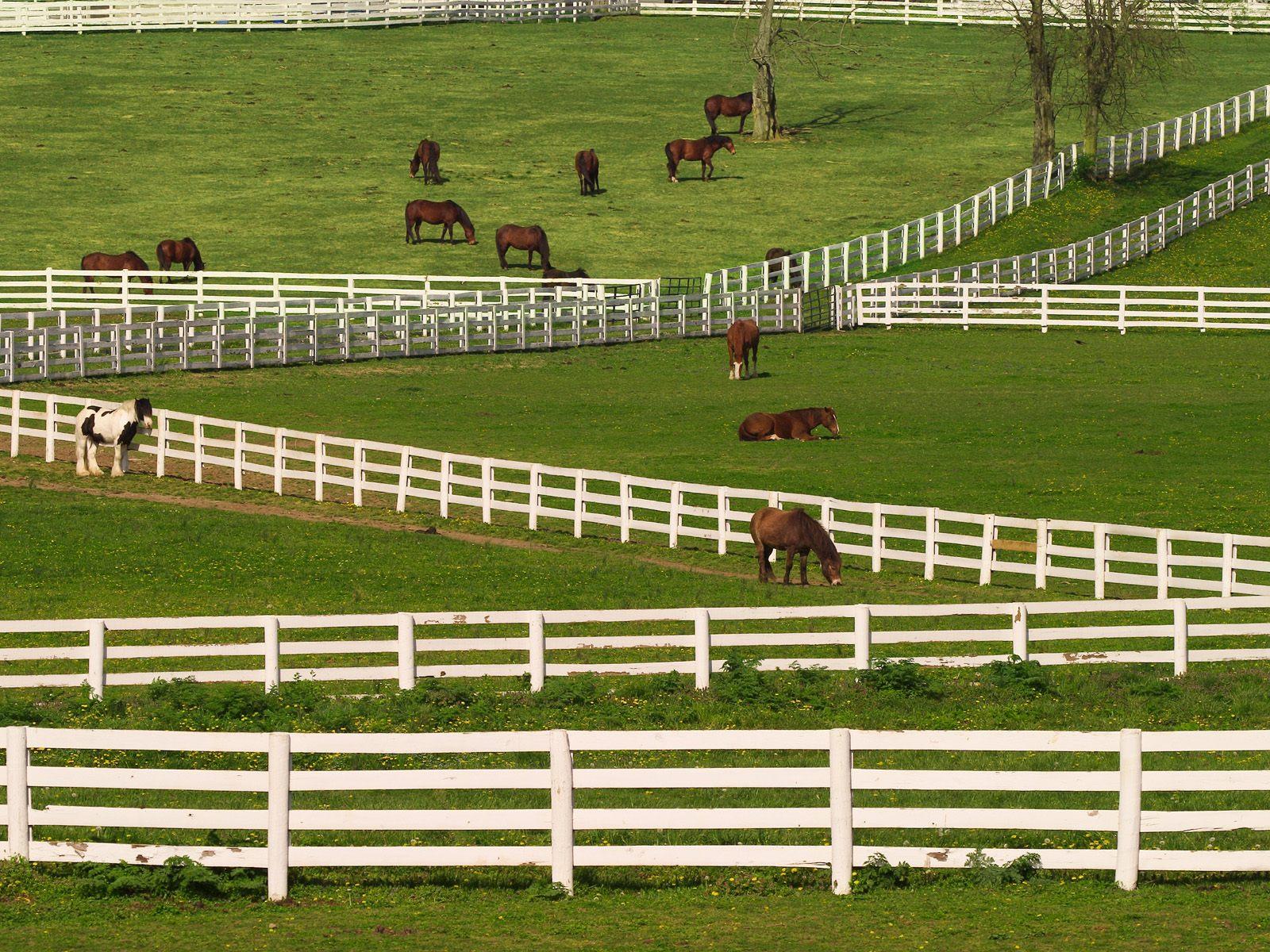HQ Thoroughbred Horses Lexington Kentucky Wallpaper   HQ 1600x1200