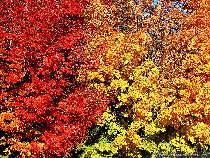 Beautiful Fall Colors wallpaper - ForWallpaper.com