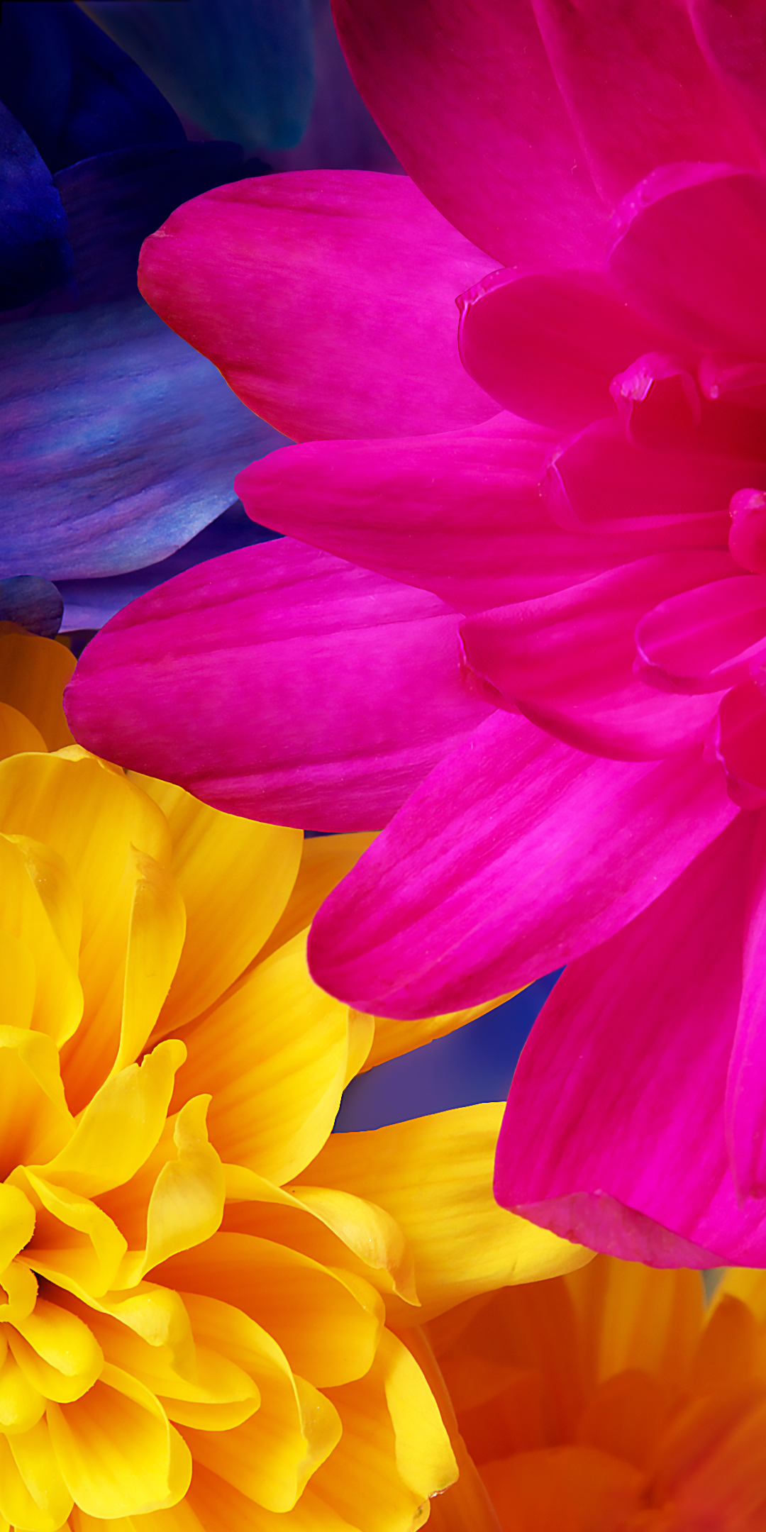 Download Sharp AQUOS S3 Wallpapers Android One DroidViews 1080x2160