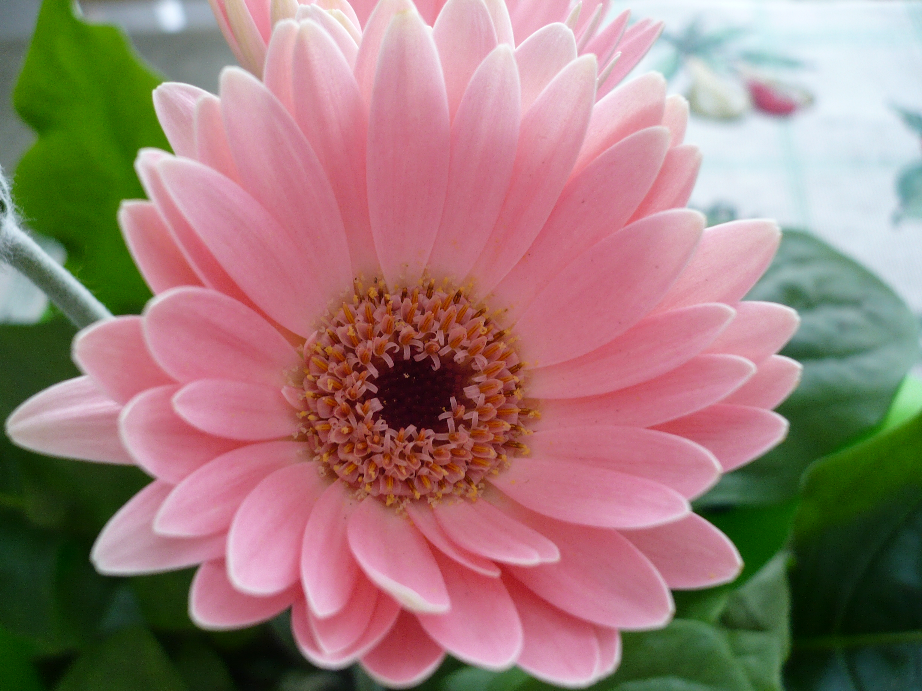 Background wallpaper wallpaper downloads Pink Flower 3072x2304