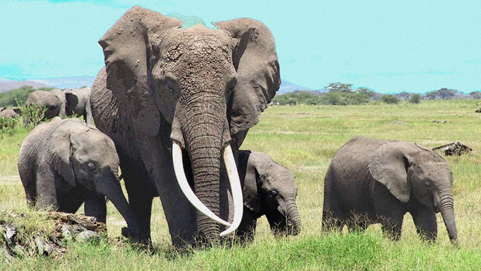 Baby elephant desktop wallpaper wallpapersafari - Baby elephant wallpaper ...