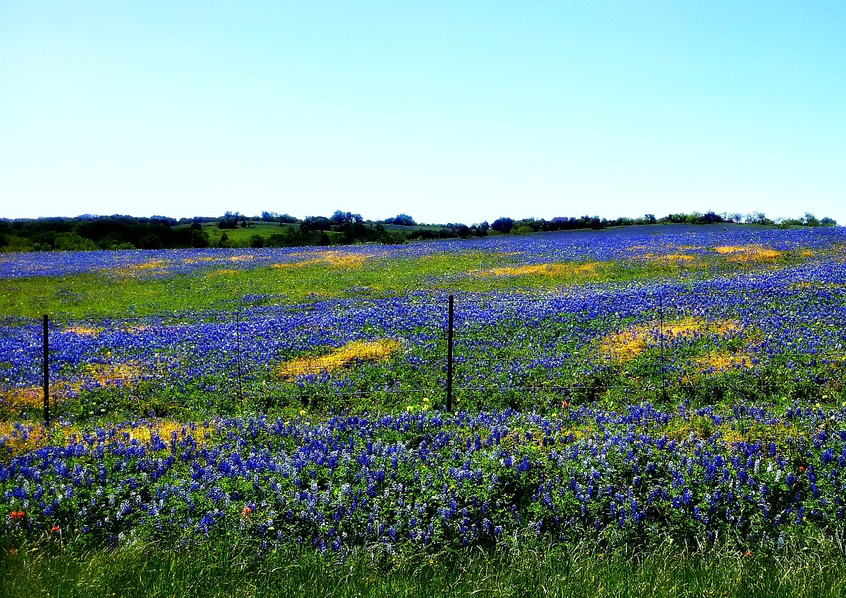 Spring in Texas 1660x1174