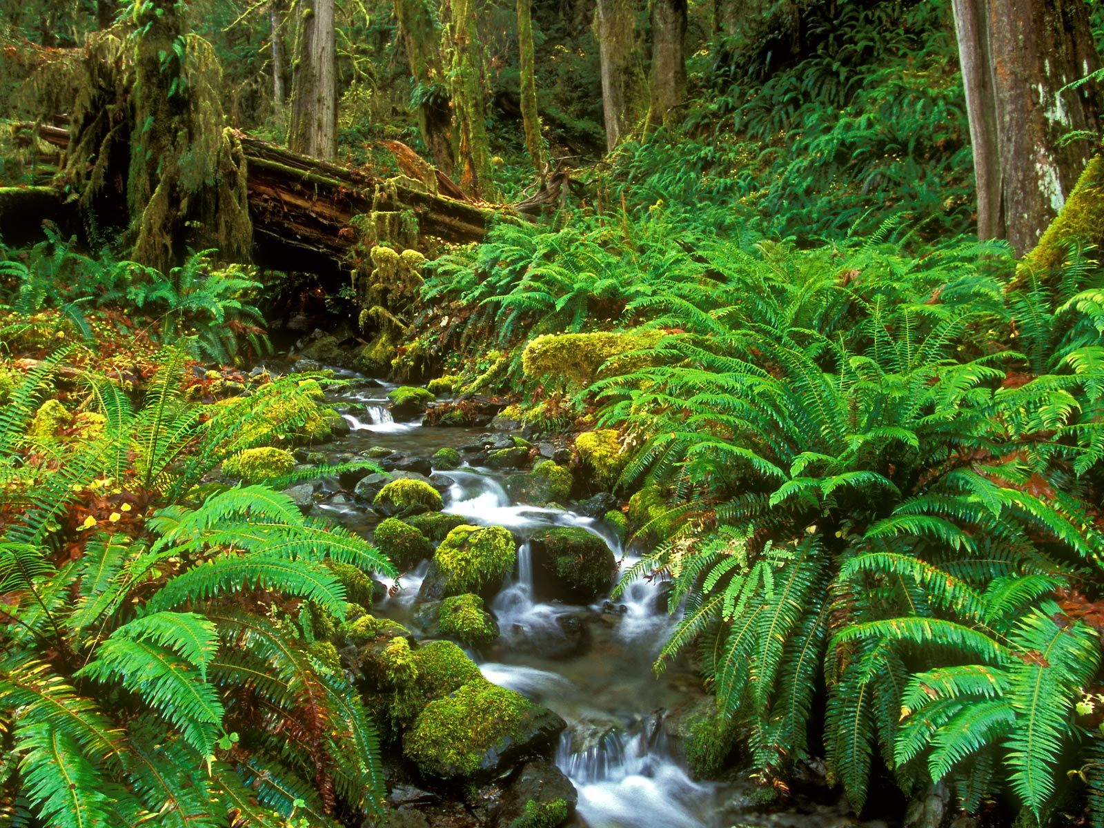 Stream Olympic National Park Washington Wallpaper   HQ Wallpapers 1600x1200