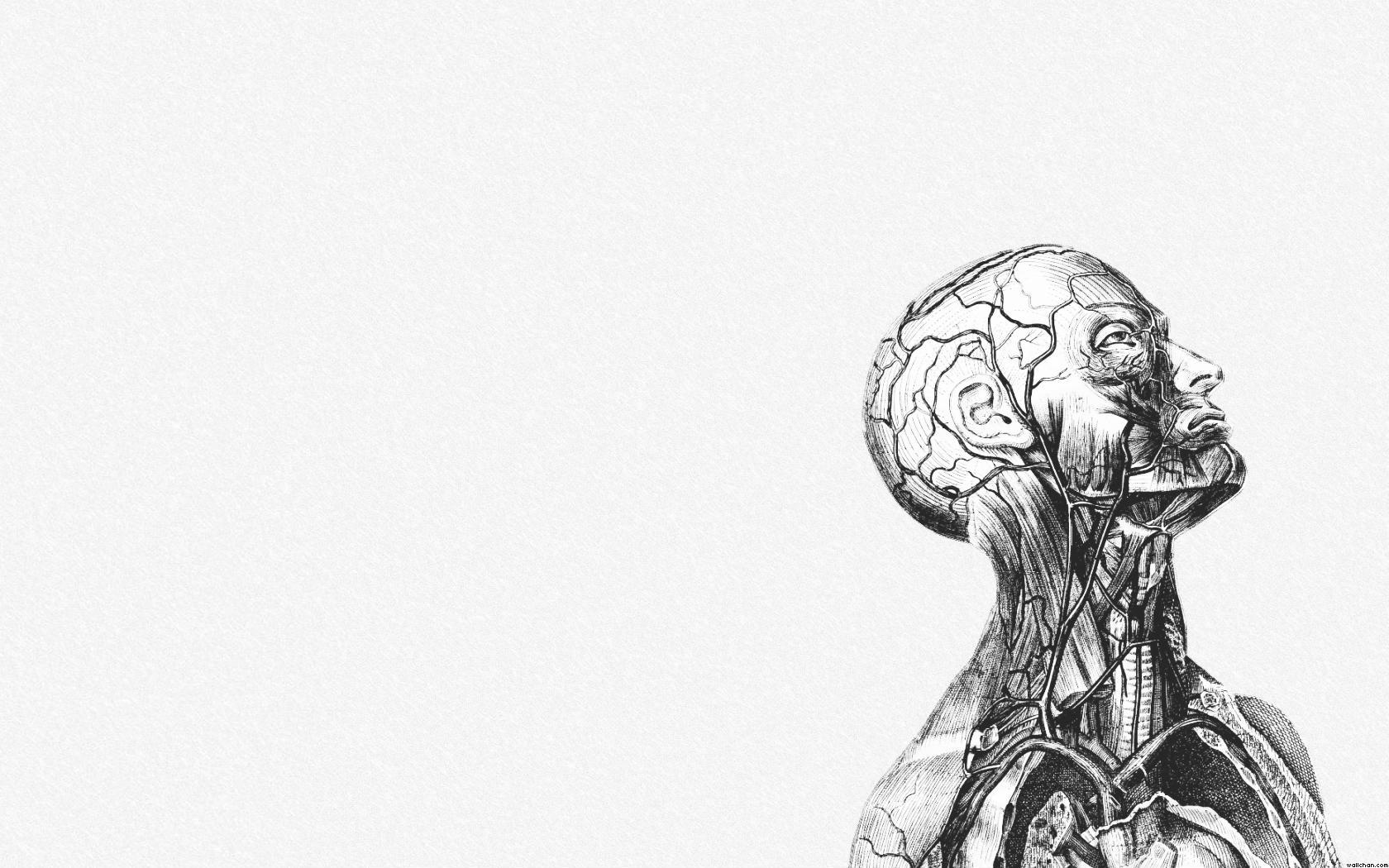 anatomy wallpaper background - photo #6