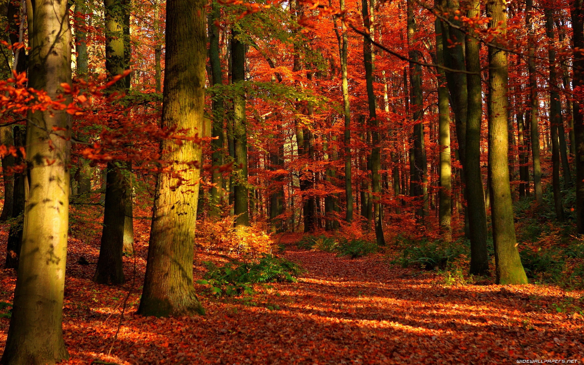 47+ Autumn Screensavers and Wallpaper on WallpaperSafari
