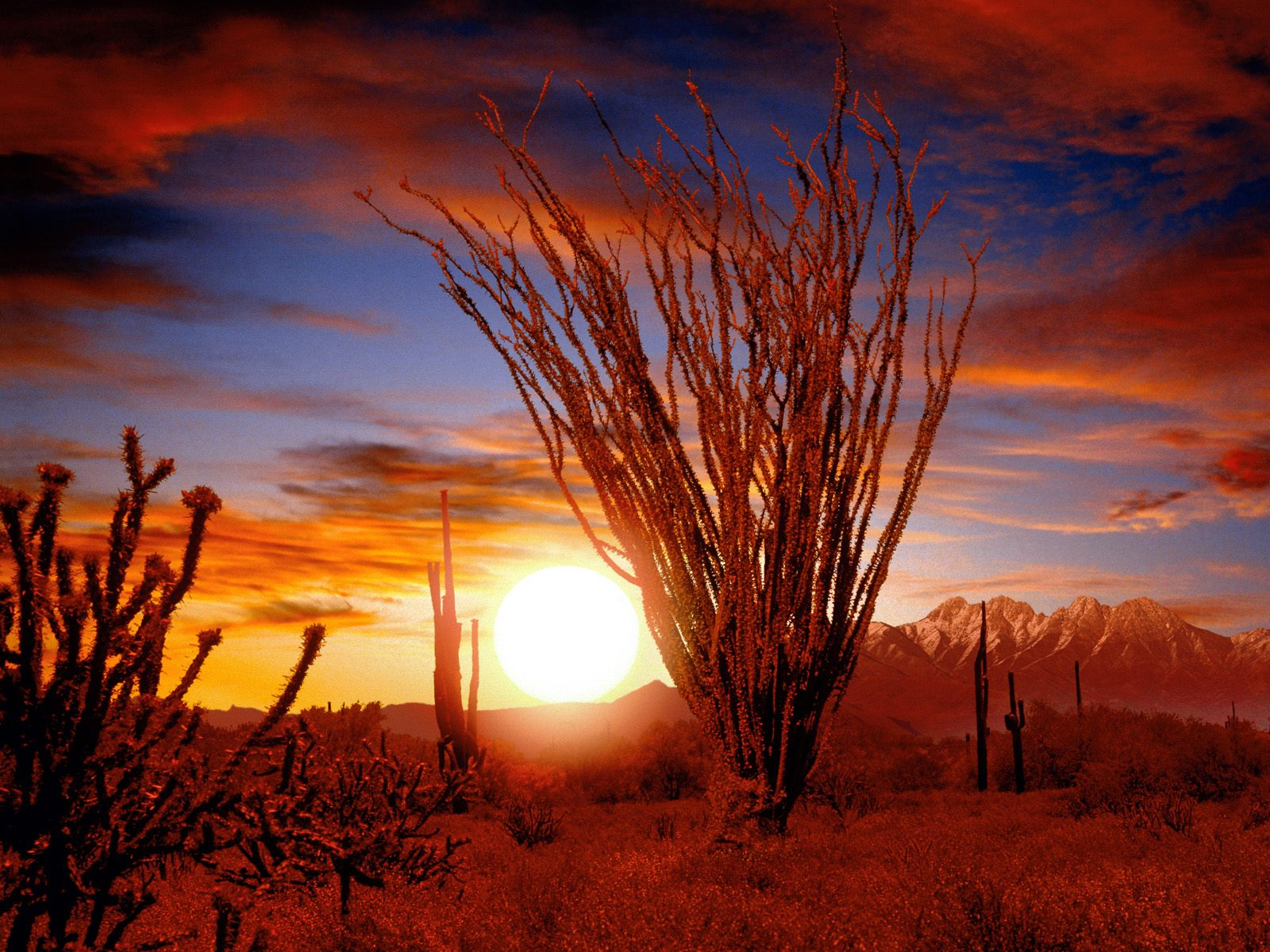 Sonora Desert Arizona Wallpapers Pictures Photos and Backgrounds 1600x1200