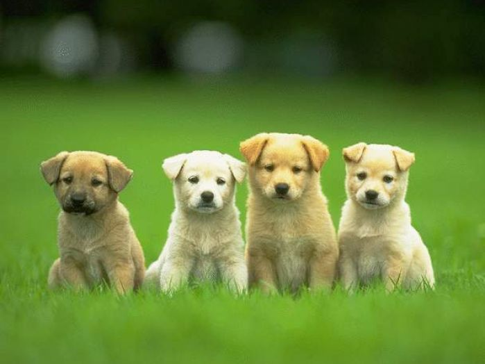 Really cute puppies wallpaper pictures 3 699x524