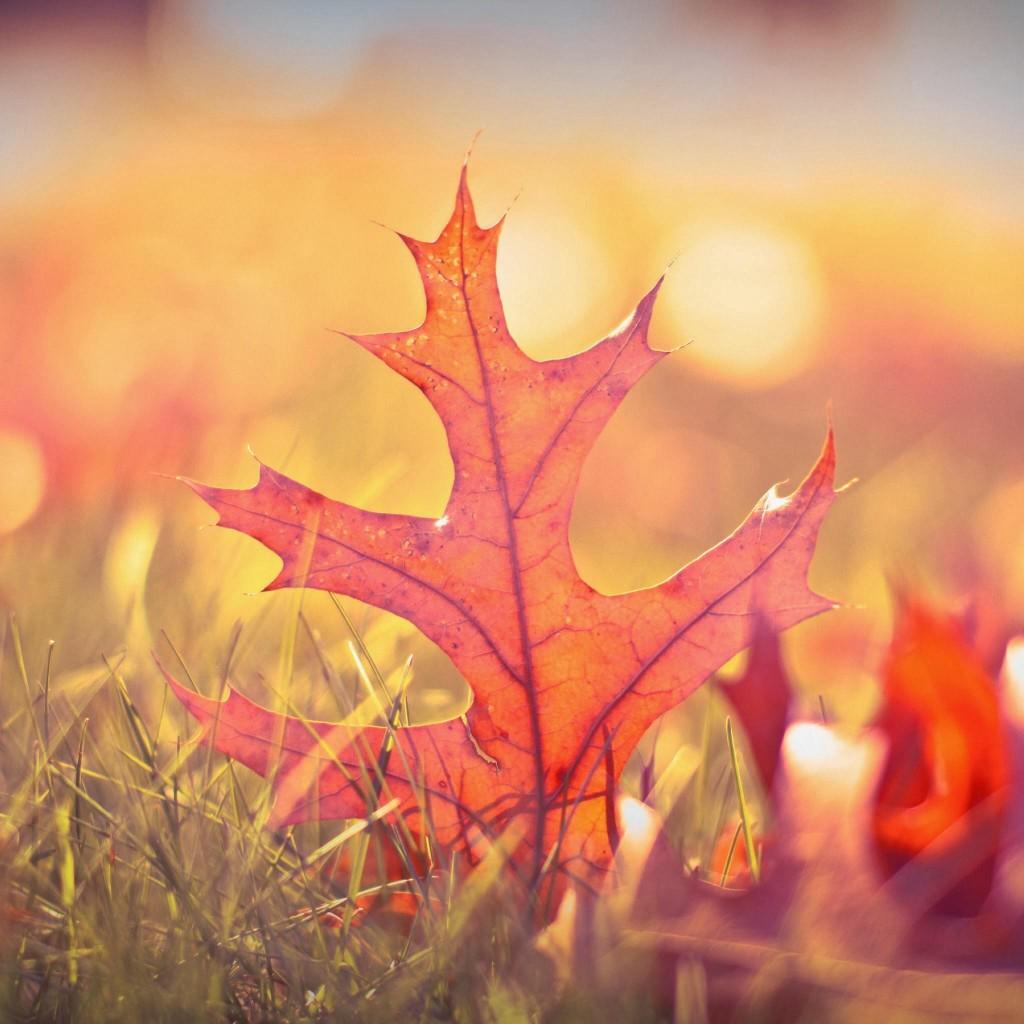 ipad retina wallpaper autumn   Wallpapers 1024x1024