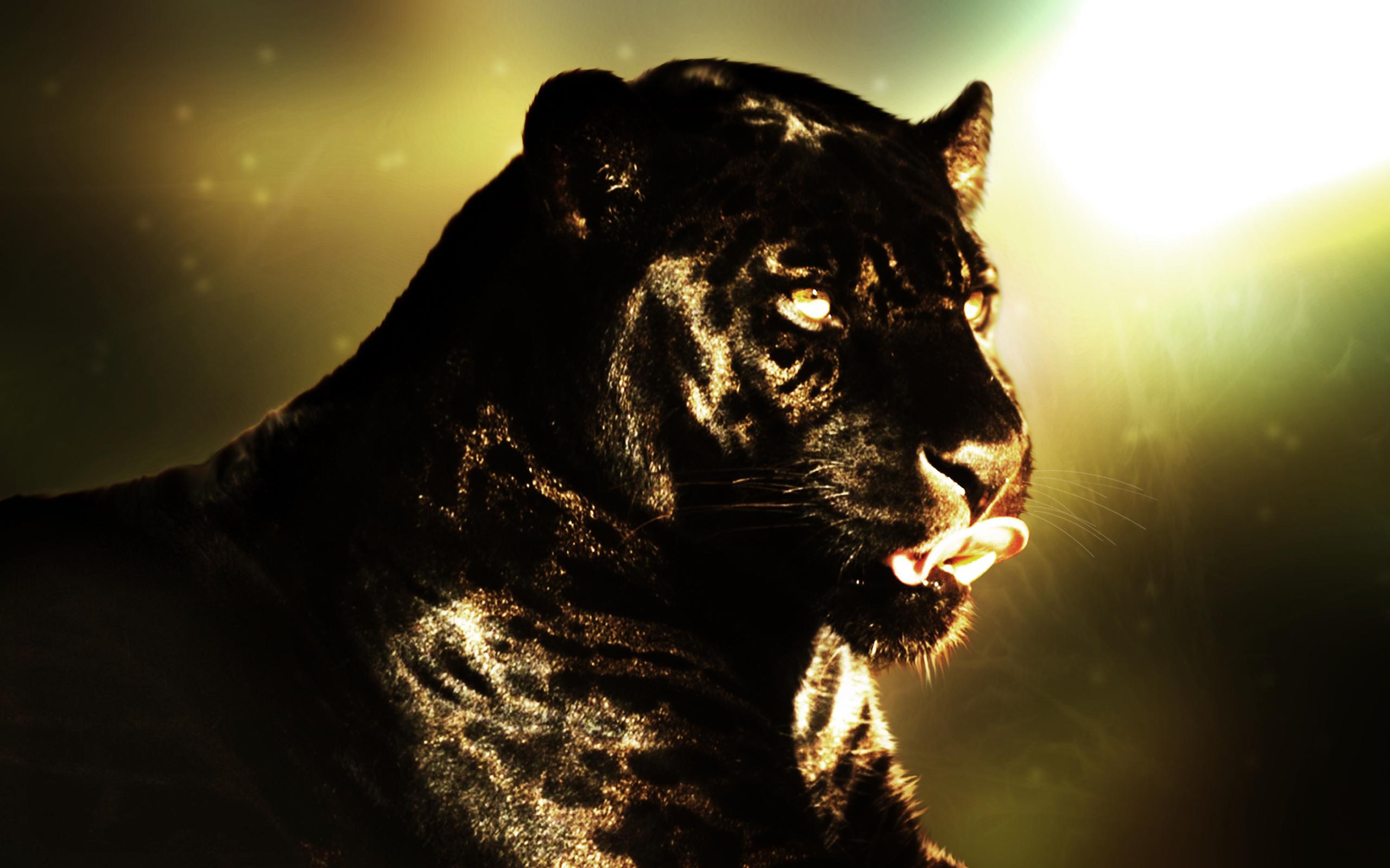 Animal   Black Panther Wallpaper 2560x1600