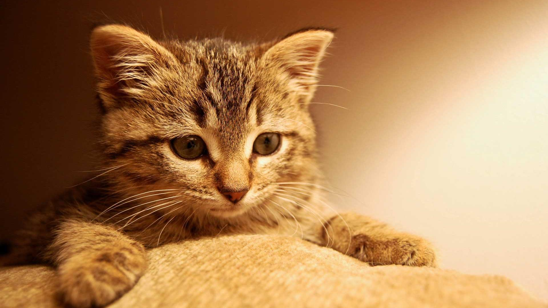 Cute Kitten wallpaper   611618 1920x1080