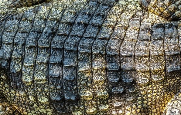 Crocodile skin leather texture crocodile skin wallpapers photos 596x380