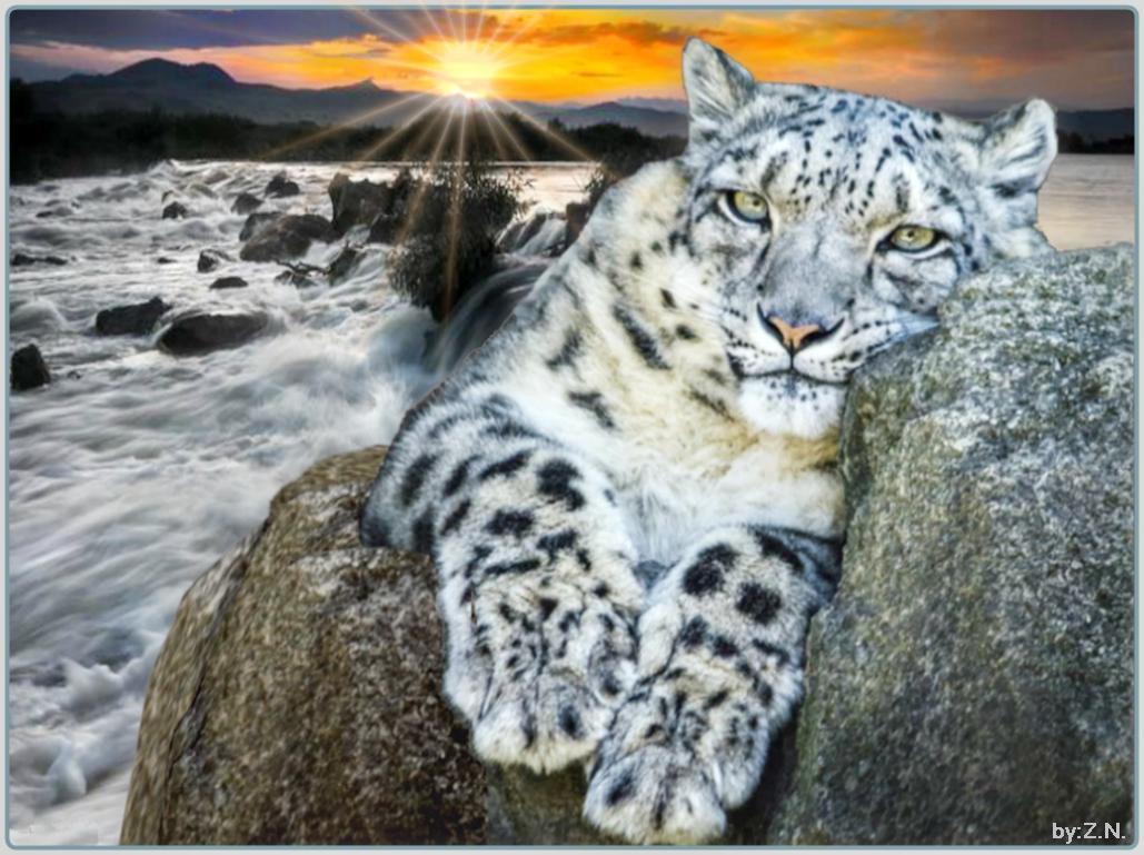 big cats wallpapers high resolution - wallpapersafari
