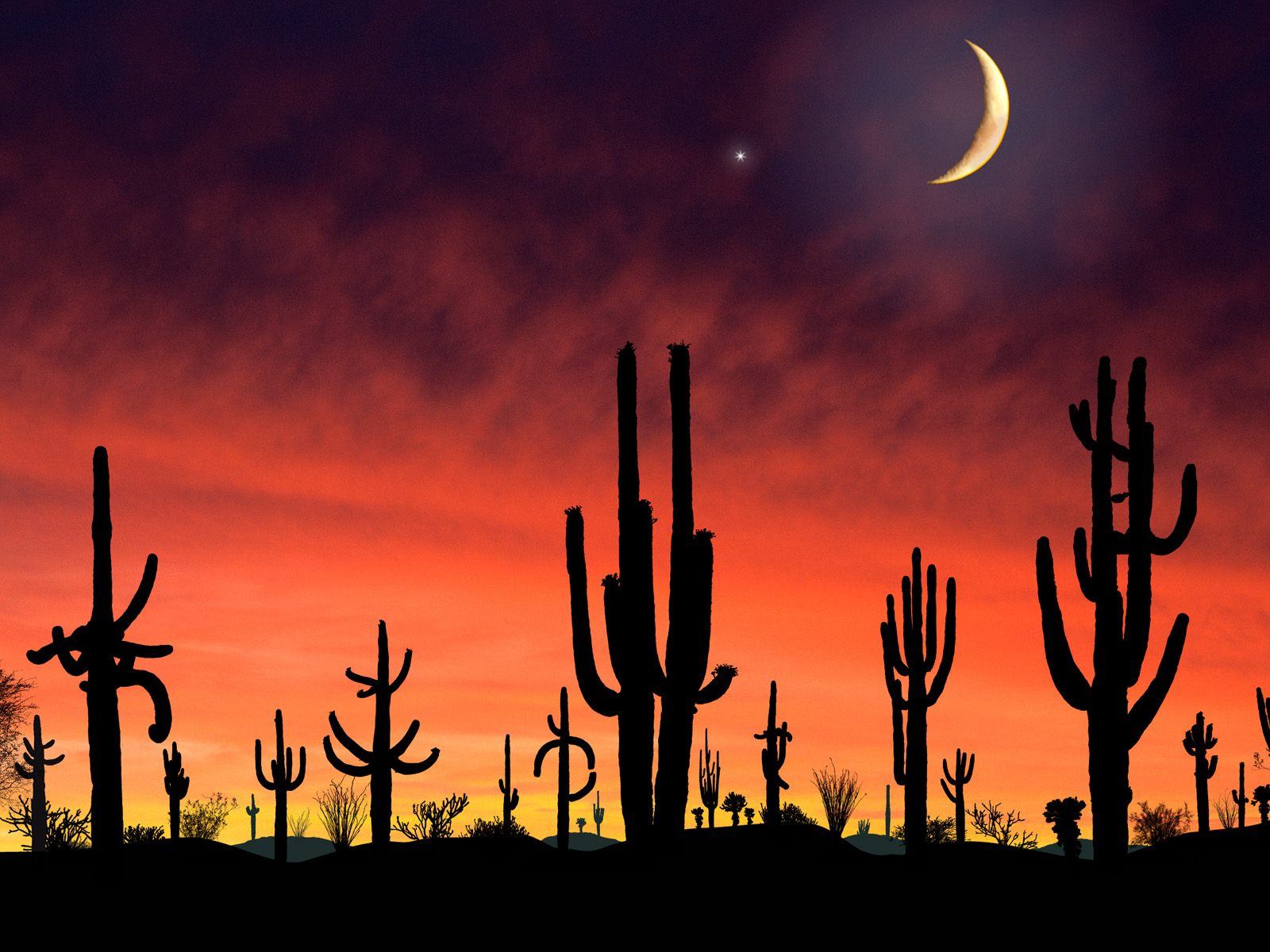 Arizona Wildcats Iphone Wallpaper Saguaro national park arizona 1600x1200