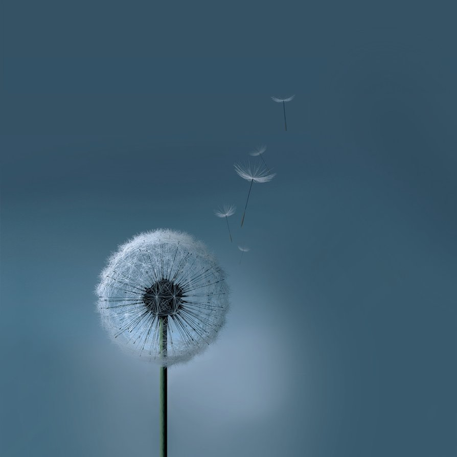 Samsung Galaxy SIII S3 Dandelion Wallpaper by kingwicked 894x894